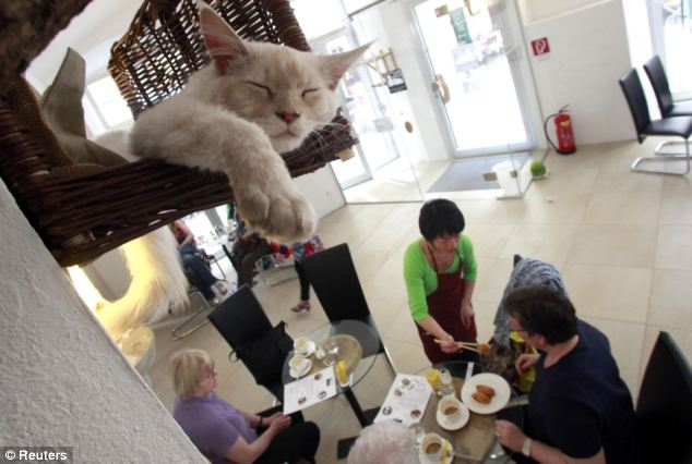 Vienna's first 'cat cafe', Cafe Neko.