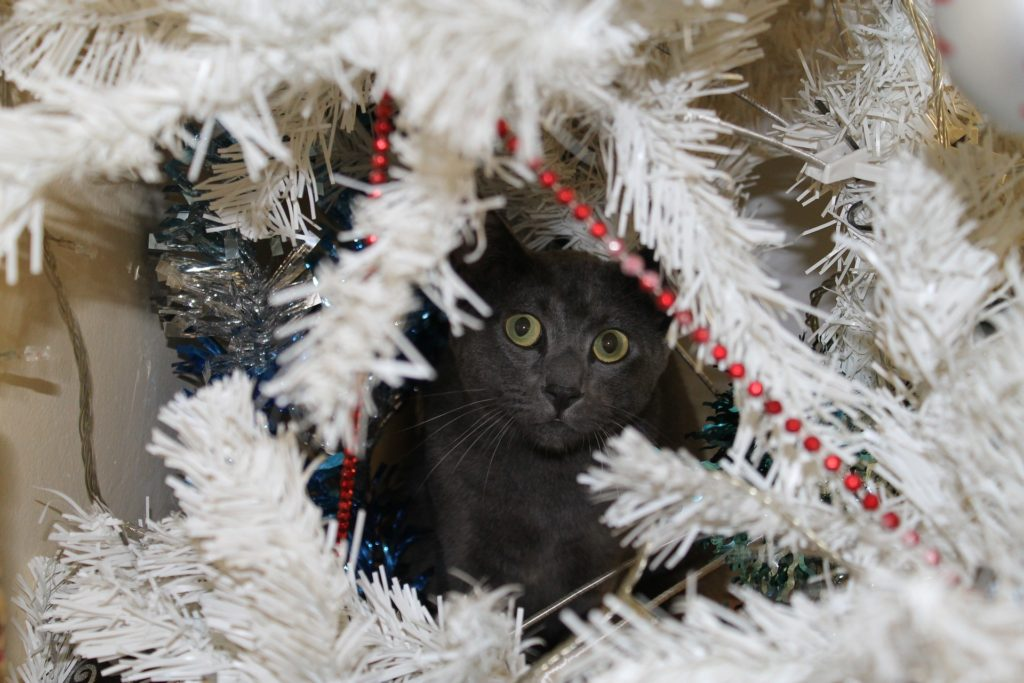 xmas-cat-in-tree